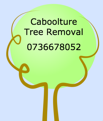 Caboolture Tree Removal - Tree Lopping