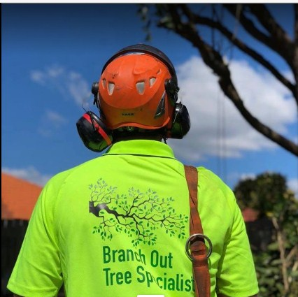 Branch Out Tree Specialists